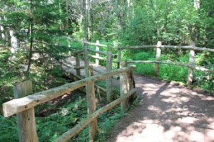 The Haunted Wood Trail at Green Gables