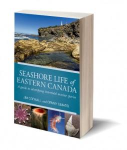 Seashore Life of Eastern Canada