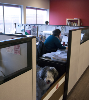 Whitney Moran is hard at work while her sheepdog, Oscar, keeps an eye on things. Photo by Joseph Muise