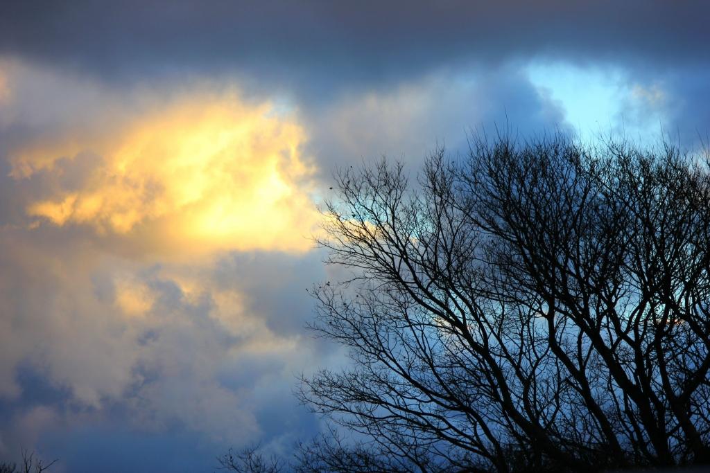 Stormy sky with tree