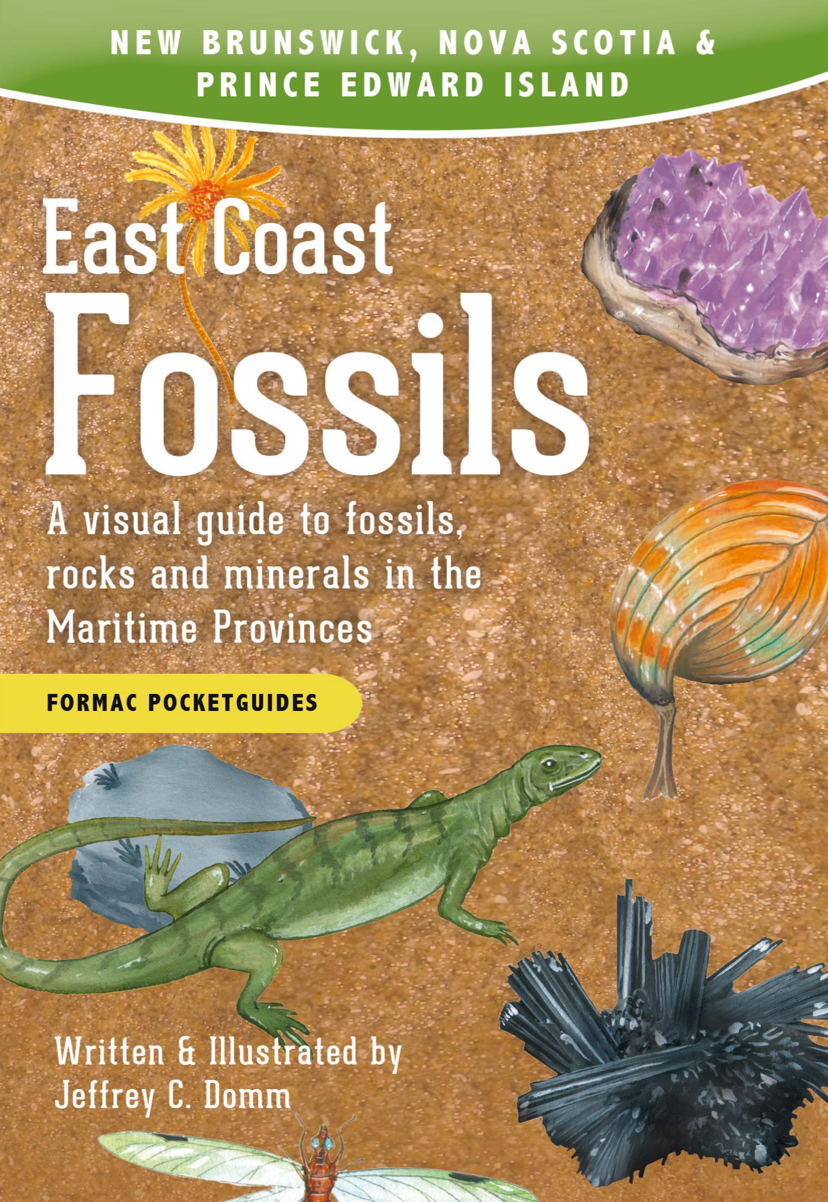 East Coast Fossils