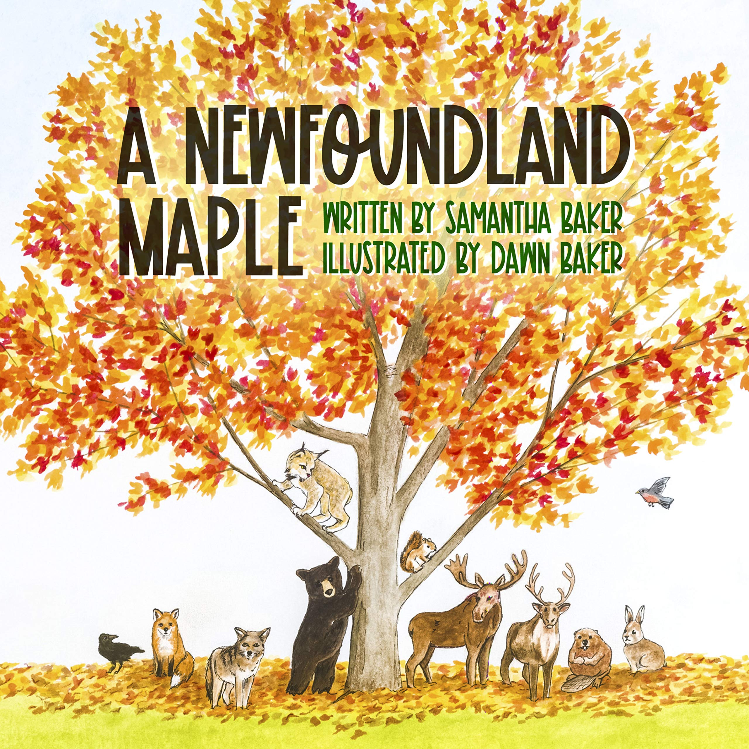 A Newfoundland Maple